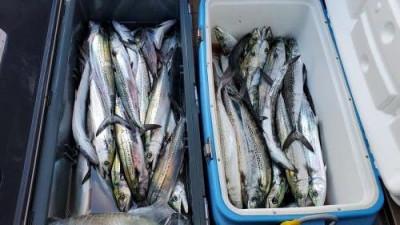 鈴木釣具店の2020年3月24日(火)2枚目の写真
