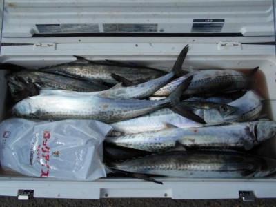 鈴木釣具店の2020年3月25日(水)1枚目の写真