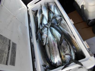 鈴木釣具店の2020年3月25日(水)2枚目の写真