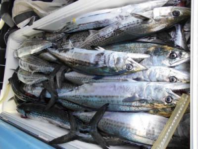 鈴木釣具店の2020年3月28日(土)3枚目の写真