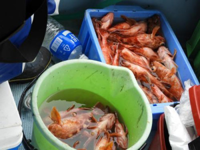 釣具の海友の2020年3月31日(火)2枚目の写真
