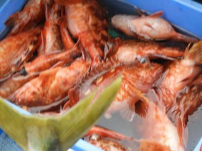 釣具の海友の2020年3月31日(火)3枚目の写真
