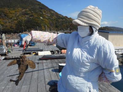 由良海つり公園&釣堀ランドの2020年4月5日(日)1枚目の写真