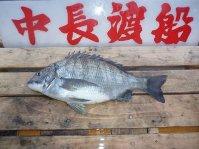 中長渡船の2020年4月8日(水)3枚目の写真