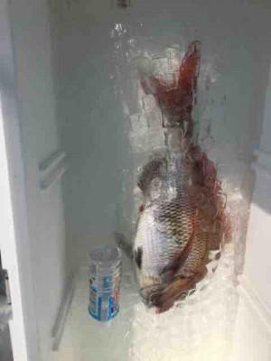 龍宮丸の2020年4月8日(水)3枚目の写真