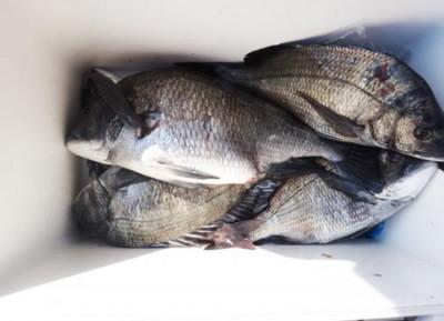 丸銀釣りセンターの2020年4月7日(火)5枚目の写真