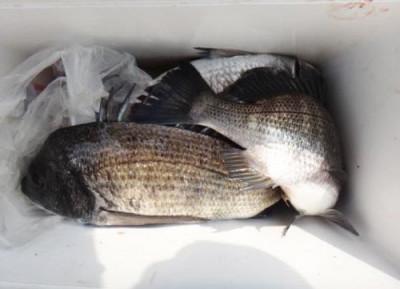 丸銀釣りセンターの2020年4月8日(水)4枚目の写真