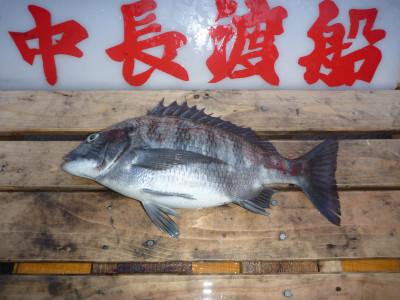 中長渡船の2020年4月9日(木)1枚目の写真