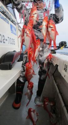 安芸のハマちゃん 浜田釣舟の2020年4月11日(土)2枚目の写真
