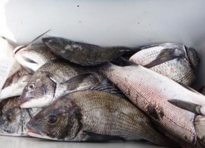 丸銀釣りセンターの2020年4月9日(木)4枚目の写真