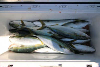 西岡遊漁の2020年4月10日(金)3枚目の写真