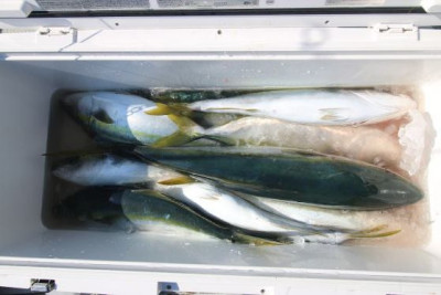 西岡遊漁の2020年4月10日(金)4枚目の写真