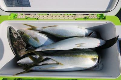 西岡遊漁の2020年4月10日(金)5枚目の写真