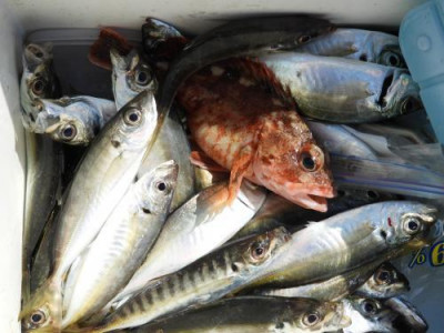 釣具の海友の2020年4月7日(火)1枚目の写真