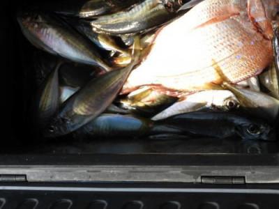 釣具の海友の2020年4月9日(木)4枚目の写真