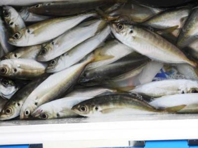 釣具の海友の2020年4月11日(土)3枚目の写真