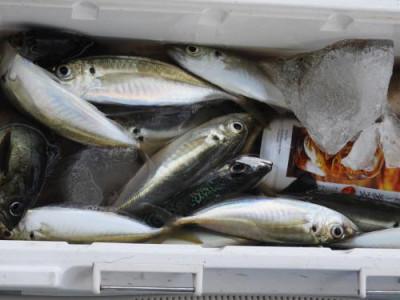 釣具の海友の2020年4月11日(土)4枚目の写真