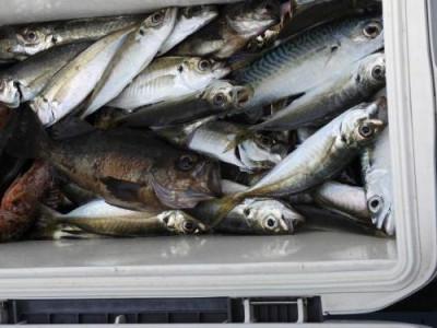 釣具の海友の2020年4月11日(土)5枚目の写真
