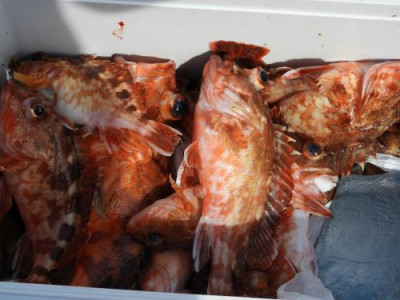 釣具の海友の2020年4月15日(水)3枚目の写真