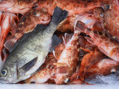 釣具の海友の2020年4月15日(水)4枚目の写真
