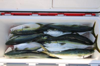 西岡遊漁の2020年4月16日(木)1枚目の写真