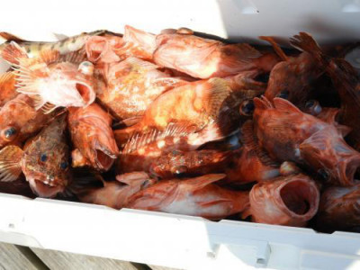 釣具の海友の2020年4月16日(木)3枚目の写真