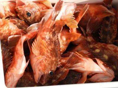 釣具の海友の2020年4月16日(木)4枚目の写真