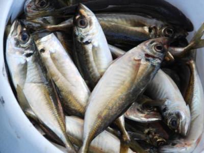 釣具の海友の2020年4月27日(月)4枚目の写真