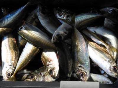 釣具の海友の2020年4月27日(月)5枚目の写真