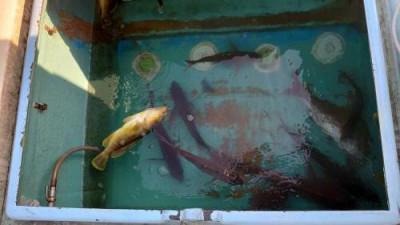 マリンエクスプレス海輝の2020年4月29日(水)5枚目の写真