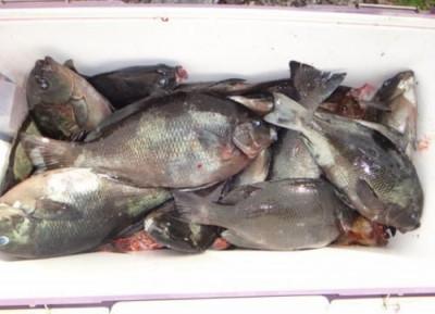 丸銀釣りセンターの2020年5月23日(土)5枚目の写真