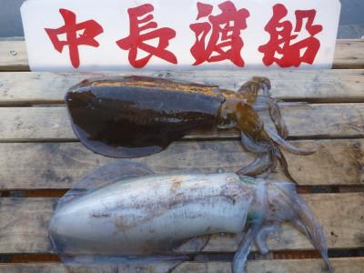 中長渡船の2020年5月28日(木)3枚目の写真