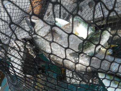 由良海つり公園&釣堀ランドの2020年5月30日(土)4枚目の写真