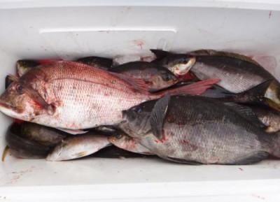 丸銀釣りセンターの2020年5月26日(火)5枚目の写真