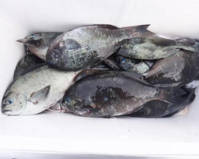 丸銀釣りセンターの2020年5月27日(水)1枚目の写真