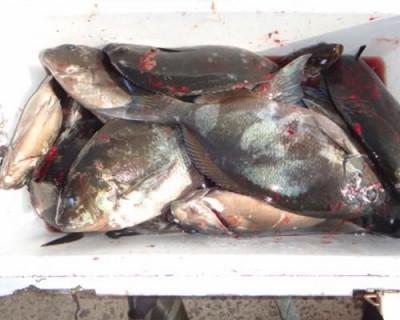 丸銀釣りセンターの2020年5月29日(金)5枚目の写真