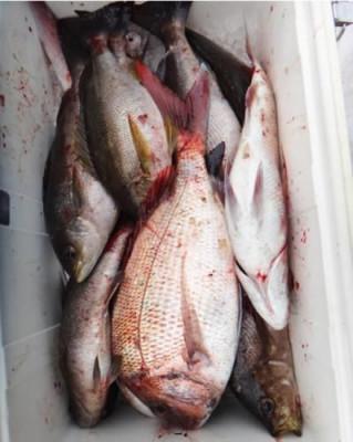 丸銀釣りセンターの2020年5月30日(土)2枚目の写真