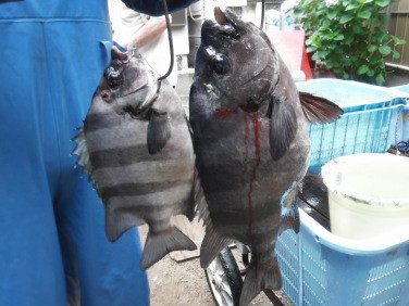 奥村釣船の2020年6月10日(水)3枚目の写真