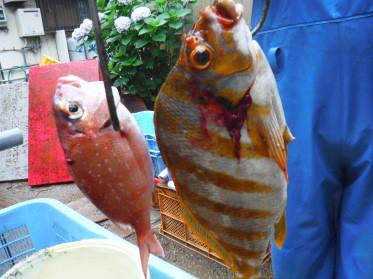 奥村釣船の2020年6月10日(水)5枚目の写真