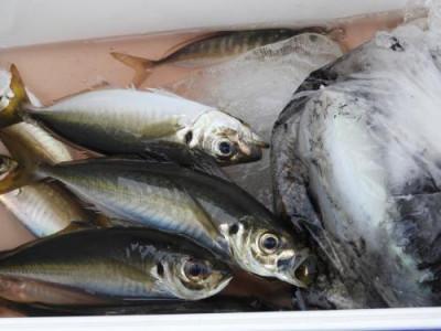 釣具の海友の2020年5月21日(木)2枚目の写真