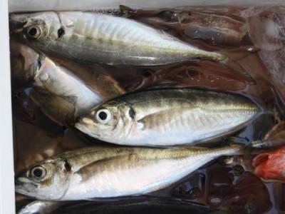 釣具の海友の2020年5月23日(土)5枚目の写真