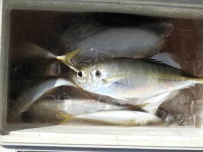 釣具の海友の2020年5月24日(日)2枚目の写真