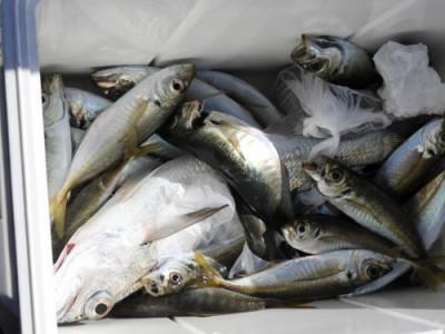 釣具の海友の2020年5月24日(日)4枚目の写真