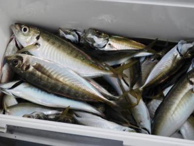 釣具の海友の2020年5月25日(月)4枚目の写真