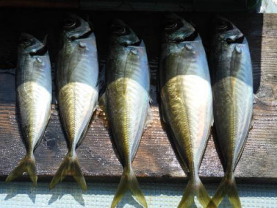 釣具の海友の2020年5月29日(金)1枚目の写真