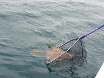 釣具の海友の2020年5月30日(土)4枚目の写真
