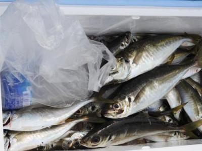 釣具の海友の2020年6月6日(土)4枚目の写真