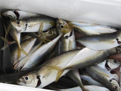 釣具の海友の2020年6月6日(土)5枚目の写真