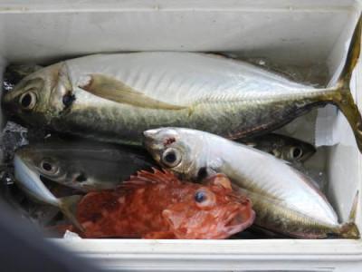 釣具の海友の2020年6月9日(火)4枚目の写真