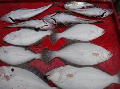 奥村釣船の2020年6月13日(土)4枚目の写真